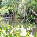 Four perfectly shady parks in Orlando