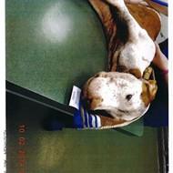 Animal cruelty case in Winter Park leads to felony arrest UPDATE!