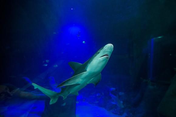 shark_arrival_18.jpg