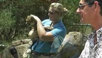 Busch Gardens' Cheetah Hunt Previews to the Media (Sorta)