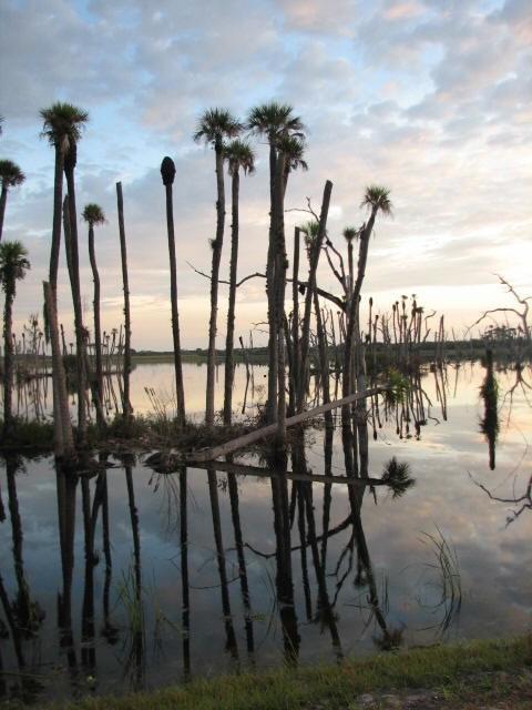 sel-18-sat-wetlands-fest1jpg