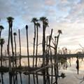 Selection Reminder: Orlando Wetlands Festival!