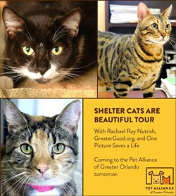 Shelter Cats Are Beautiful Tour