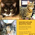 Rachael Ray's <i>Shelter Cats are Beautiful</i> tour  is coming to Orlando