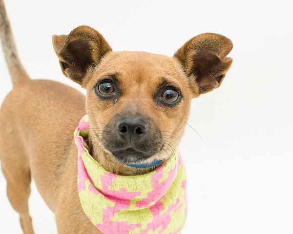 Take me home! 30 darling pups looking for homes at Orange County Animal Services