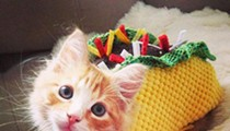 Today only you can adopt a $5 cat for 'Cinco de Meow'