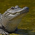 Affordable Care Act finally trickles down to Gator's Dockside