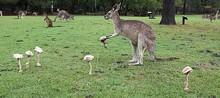 australia2jpg