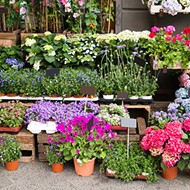 Snag some landscaping essentials at Leu Gardens' annual plant sale this weekend