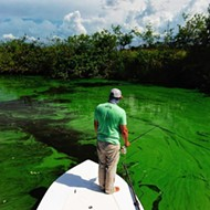 Watch this video of the effects from Lake Okeechobee's toxic discharge