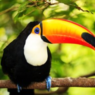 Florida court gives green light to toucan farming lawsuit against Orange County