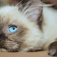 A new cat cafe called 'The Kitty Beautiful' is coming to downtown Orlando and we are here for this