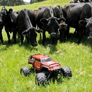 Happy Friday! Watch this RC minitruck make a herd of cows lose their damn minds