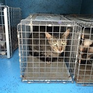 Over 100 cats removed from foul smelling home in Daytona Beach
