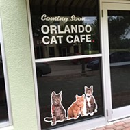 Cat Cafe to open in Clermont at Cagan Crossings