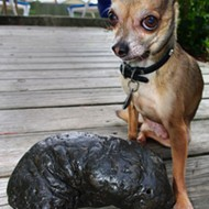 Jacksonville man holds Guinness World Record for largest collection of fossilized poop