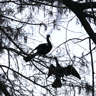 Orlando officials blame Lake Adair's poor water quality on bird poop, but environmentalists disagree