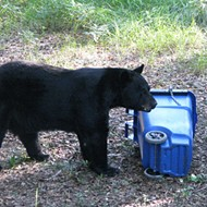 Seminole County is considering mandatory bear-proof trashcans