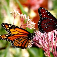 Florida exceeds 'Million Pollinator Garden Challenge' goal
