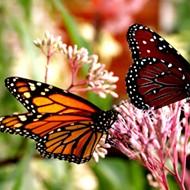 Florida exceeds 'Million Pollinator Garden Challenge' goal