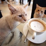 Hey Orlando kitty cafes, stop toying with our hearts