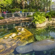 Guests can now access SeaWorld's Manatee Rehab Center