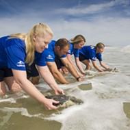 SeaWorld Orlando returns 9 rescued sea turtles to Florida waters