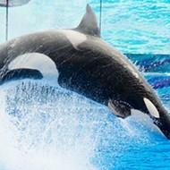SEC charges SeaWorld lawyer with insider trading