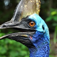 The giant cassowary bird that killed its Florida owner is up for sale