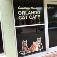 Cat Cafe To Open In Clermont At Cagan Crossings Blogs