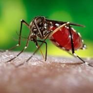 Rick Scott declares Miami's Wynwood neighborhood Zika-free