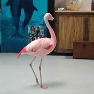 Orlando man who allegedly killed flamingo at Busch Gardens dies in car crash