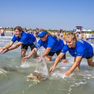 Five sea turtles and a sandhill crane returned to natural environments after SeaWorld Orlando care