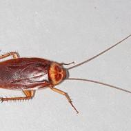 Florida House Speaker says he's exposing 'cockroaches' in Rick Scott's programs