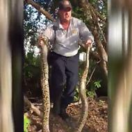 Video shows man catching 10-foot Burmese python near Florida golf course