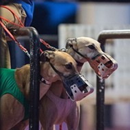 Kennel owner sues state of Florida over greyhound racing ban