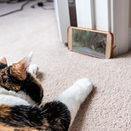 Enzian and Pet Rescue by Judy team up for CatVideoFest