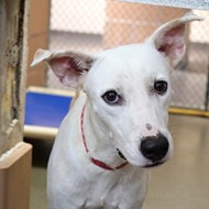 Dogs from the Bahamas are up for adoption at the Pet Alliance of Greater Orlando