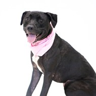 Meet Onyx! She's friendly with children, women and men, and other animals