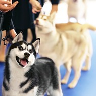 AKC Championships bring a Canine Extravaganza to Orlando's Orange County Convention Center