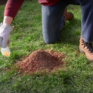 Warmer winter causing fire ants to flourish in Volusia and Flagler counties