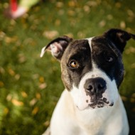 Meet Bumpy! He was recently featured on local news, showing off his obedience skills