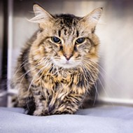 Meet James Pawsten! He's a rather handsome 6-year-old who would love to come home with you