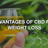 Advantages of CBD oil on weight loss and obesity