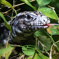 Judge tosses out Florida reptile law