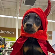 'Spooky Poochie' pet costume contest happening on Halloween weekend in Colonialtown