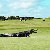 Fore! Alligator hits the links at a Central Florida golf course