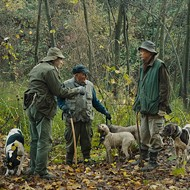 Despite a short running time, Italian doc 'The Truffle Hunters' is no mere trifle