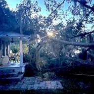 Gigantic oak tree falls at College Park's Kerouac House