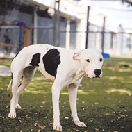 Affectionate, high-energy Gucci would be gucci if you adopted her from the Orange County shelter